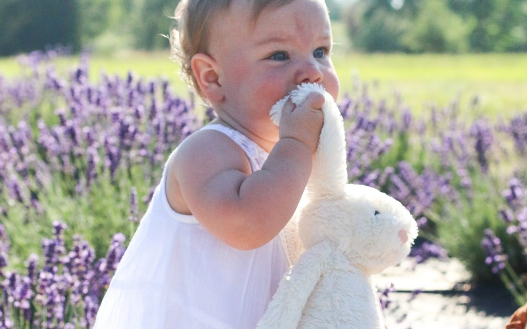 NEW HAMPSHIRE FAMILY PHOTOGRAPHER | PHOEBE IN THE LAVENDER FIELDS
